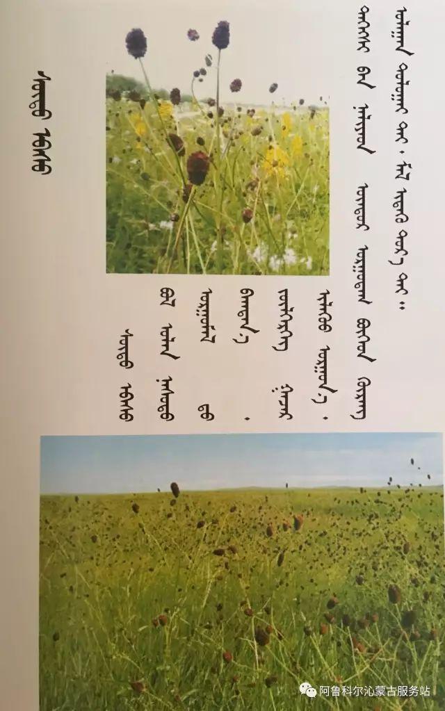 100 多种草的蒙古文介绍 第65张 100 多种草的蒙古文介绍 蒙古文库