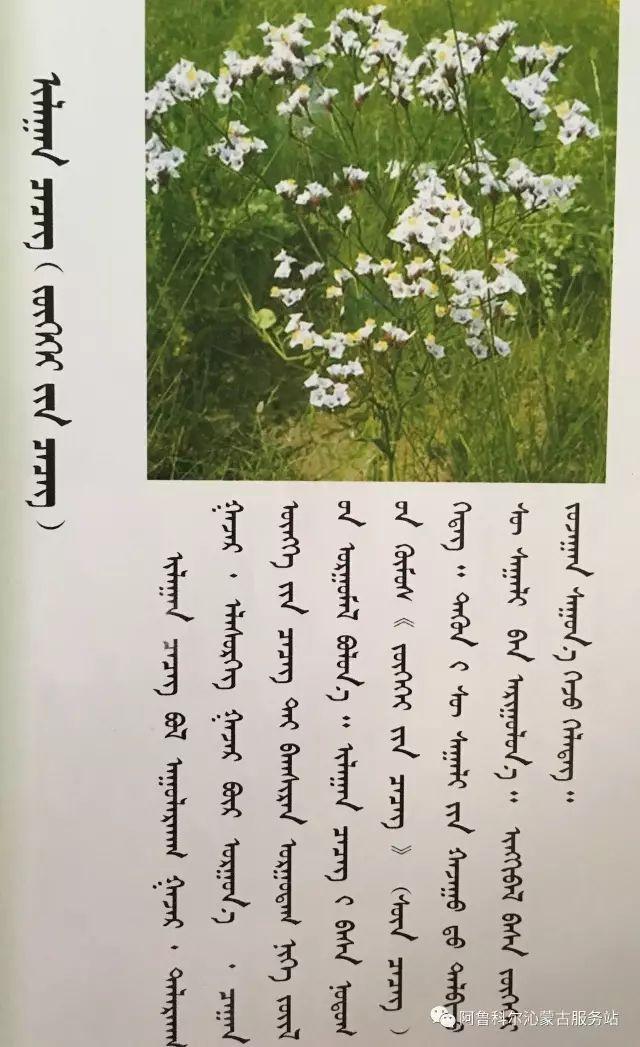 100 多种草的蒙古文介绍 第64张 100 多种草的蒙古文介绍 蒙古文库