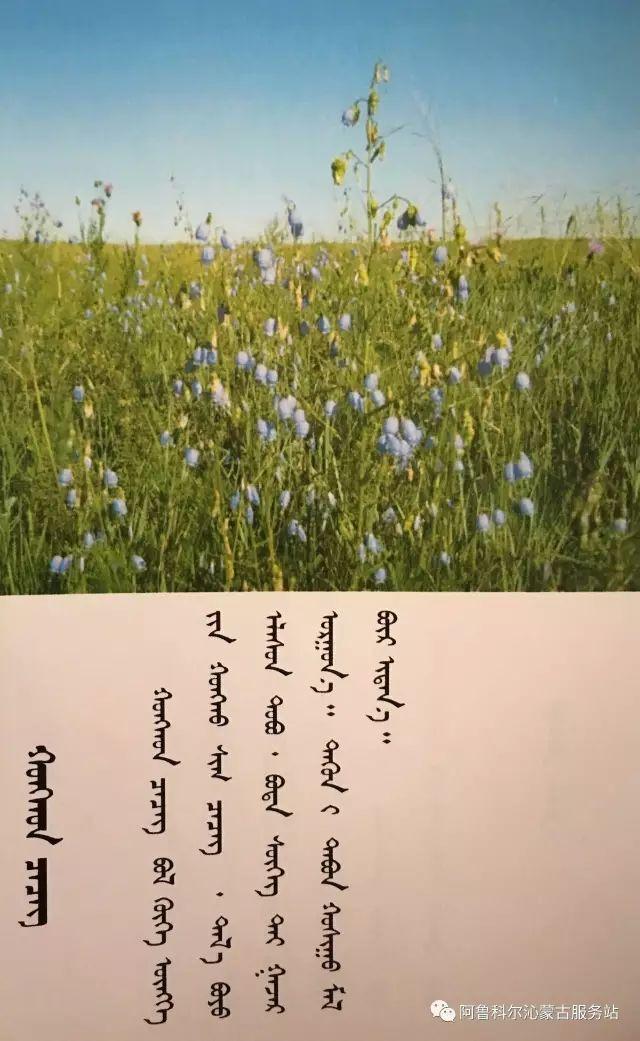 100 多种草的蒙古文介绍 第72张 100 多种草的蒙古文介绍 蒙古文库