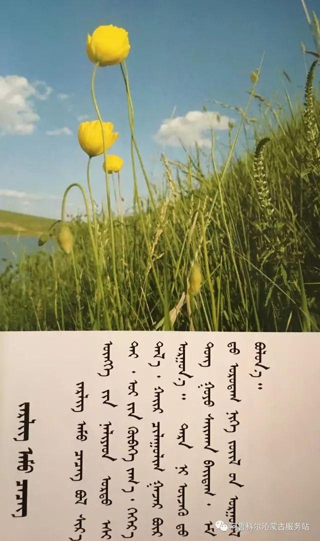 100 多种草的蒙古文介绍 第74张 100 多种草的蒙古文介绍 蒙古文库