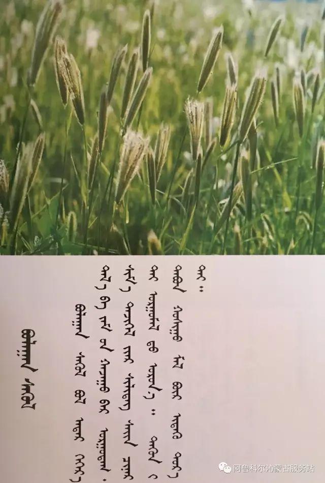100 多种草的蒙古文介绍 第79张 100 多种草的蒙古文介绍 蒙古文库