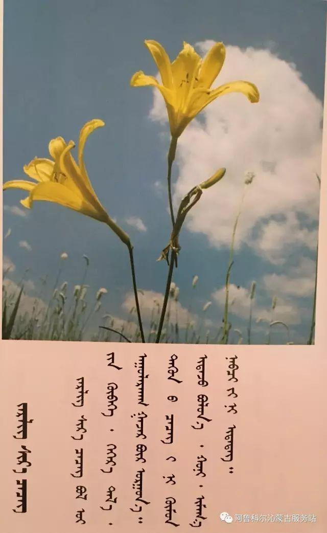 100 多种草的蒙古文介绍 第84张 100 多种草的蒙古文介绍 蒙古文库