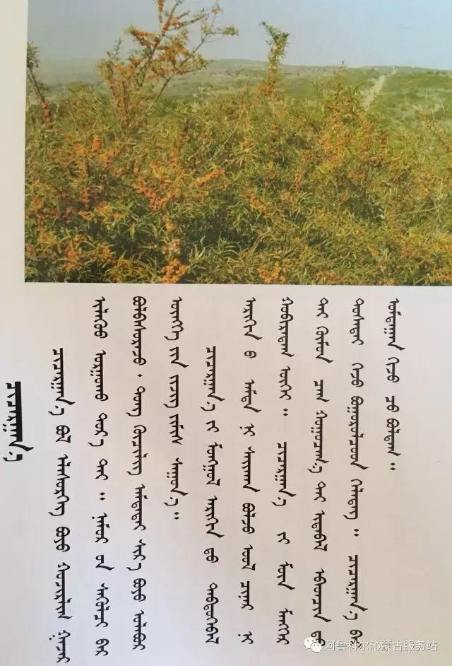100 多种草的蒙古文介绍 第91张 100 多种草的蒙古文介绍 蒙古文库