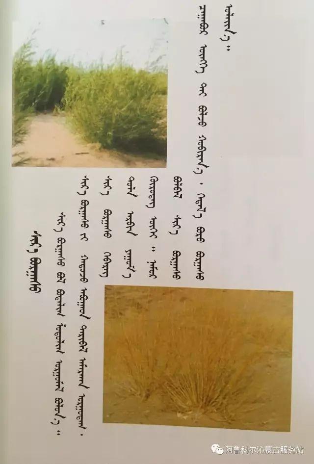 100 多种草的蒙古文介绍 第102张 100 多种草的蒙古文介绍 蒙古文库