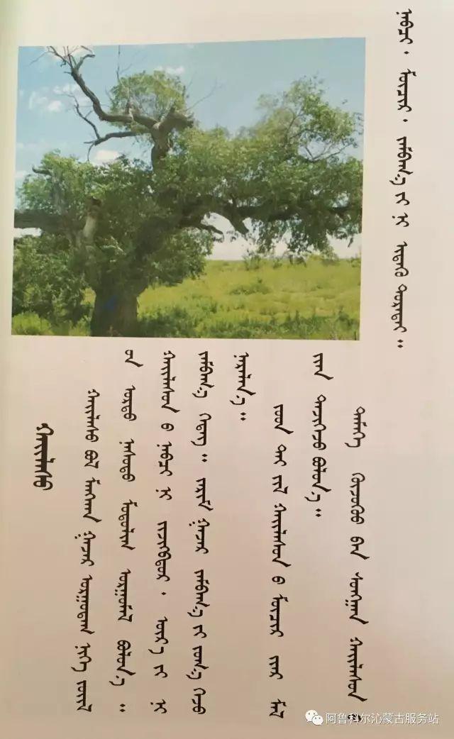 100 多种草的蒙古文介绍 第100张 100 多种草的蒙古文介绍 蒙古文库
