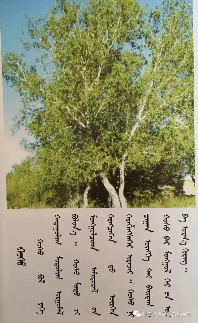 100 多种草的蒙古文介绍 第104张 100 多种草的蒙古文介绍 蒙古文库
