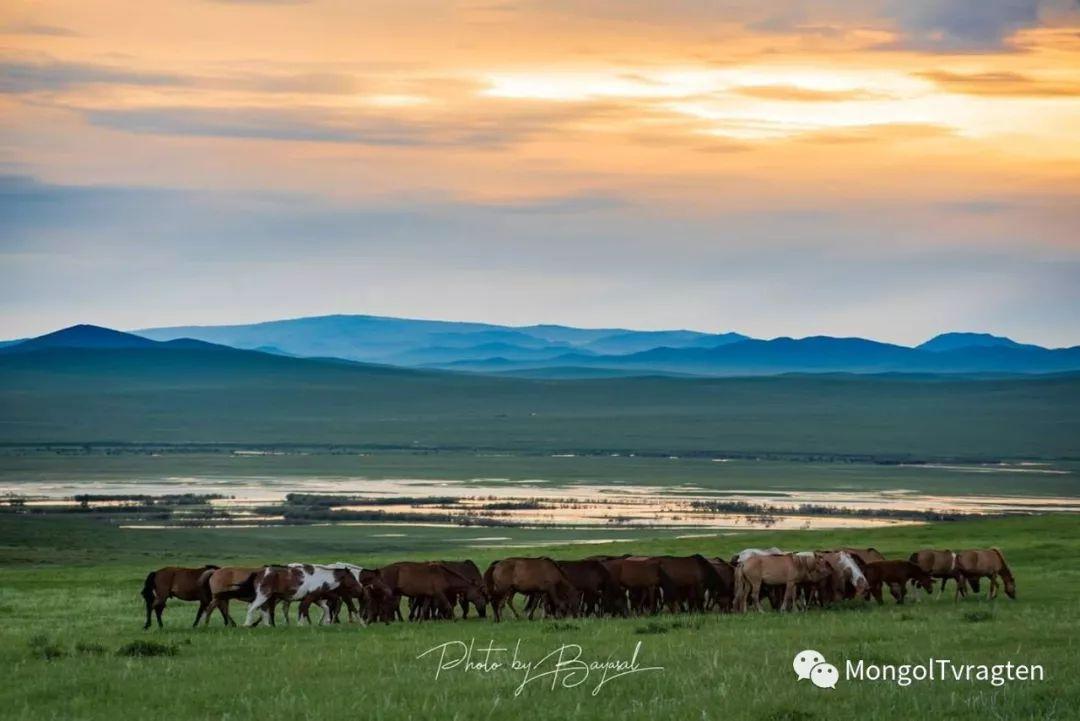 ᠮᠣᠩᠭᠣᠯ ᠮᠣᠷᠢ- ᠭ᠂ ᠪᠠᠶᠠᠰᠣᠯ 第6张 ᠮᠣᠩᠭᠣᠯ ᠮᠣᠷᠢ- ᠭ᠂ ᠪᠠᠶᠠᠰᠣᠯ 蒙古文化