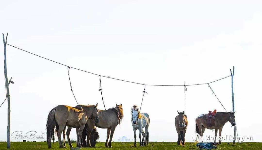 ᠮᠣᠩᠭᠣᠯ ᠮᠣᠷᠢ- ᠭ᠂ ᠪᠠᠶᠠᠰᠣᠯ 第15张 ᠮᠣᠩᠭᠣᠯ ᠮᠣᠷᠢ- ᠭ᠂ ᠪᠠᠶᠠᠰᠣᠯ 蒙古文化