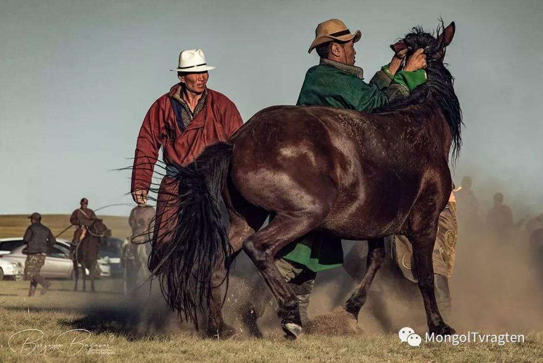 ᠮᠣᠩᠭᠣᠯ ᠮᠣᠷᠢ- ᠭ᠂ ᠪᠠᠶᠠᠰᠣᠯ 第21张 ᠮᠣᠩᠭᠣᠯ ᠮᠣᠷᠢ- ᠭ᠂ ᠪᠠᠶᠠᠰᠣᠯ 蒙古文化