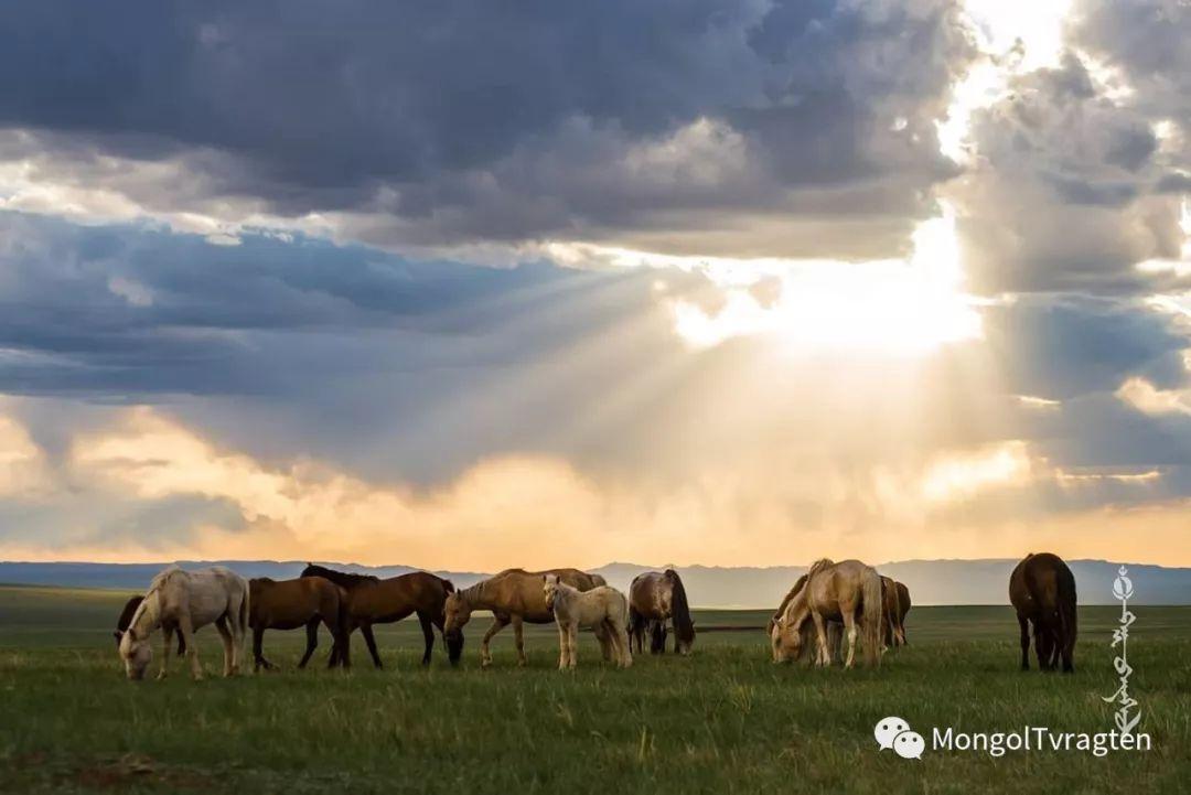 ᠮᠣᠩᠭᠣᠯ ᠮᠣᠷᠢ- ᠭ᠂ ᠪᠠᠶᠠᠰᠣᠯ 第26张 ᠮᠣᠩᠭᠣᠯ ᠮᠣᠷᠢ- ᠭ᠂ ᠪᠠᠶᠠᠰᠣᠯ 蒙古文化