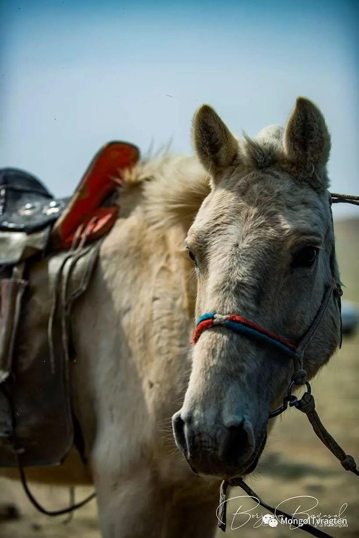 ᠮᠣᠩᠭᠣᠯ ᠮᠣᠷᠢ- ᠭ᠂ ᠪᠠᠶᠠᠰᠣᠯ 第13张 ᠮᠣᠩᠭᠣᠯ ᠮᠣᠷᠢ- ᠭ᠂ ᠪᠠᠶᠠᠰᠣᠯ 蒙古文化