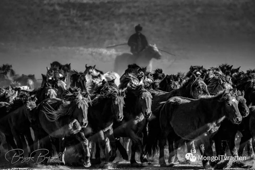 ᠮᠣᠩᠭᠣᠯ ᠮᠣᠷᠢ- ᠭ᠂ ᠪᠠᠶᠠᠰᠣᠯ 第18张 ᠮᠣᠩᠭᠣᠯ ᠮᠣᠷᠢ- ᠭ᠂ ᠪᠠᠶᠠᠰᠣᠯ 蒙古文化