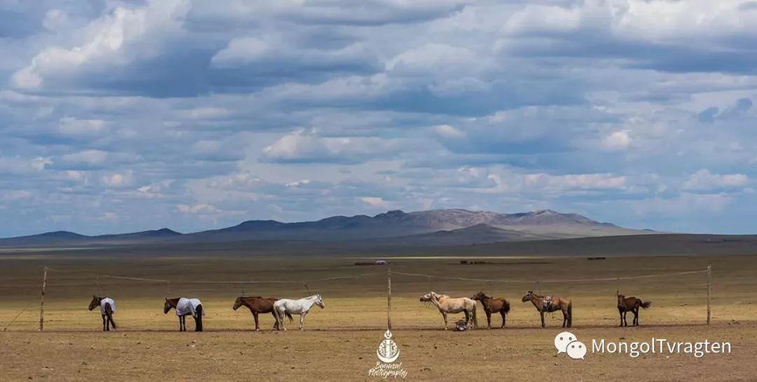 ᠮᠣᠩᠭᠣᠯ ᠮᠣᠷᠢ- ᠭ᠂ ᠪᠠᠶᠠᠰᠣᠯ 第22张 ᠮᠣᠩᠭᠣᠯ ᠮᠣᠷᠢ- ᠭ᠂ ᠪᠠᠶᠠᠰᠣᠯ 蒙古文化