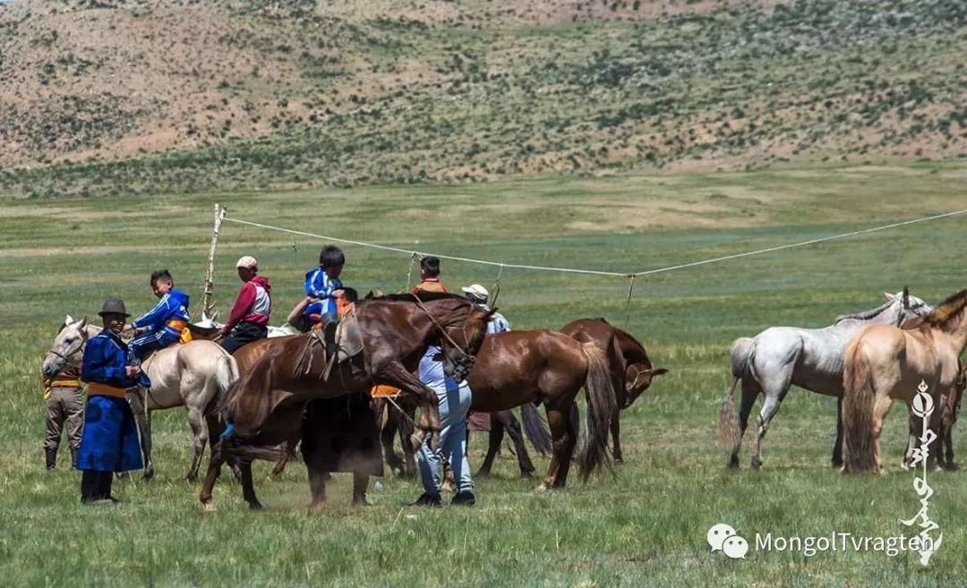 ᠮᠣᠩᠭᠣᠯ ᠮᠣᠷᠢ- ᠭ᠂ ᠪᠠᠶᠠᠰᠣᠯ 第25张 ᠮᠣᠩᠭᠣᠯ ᠮᠣᠷᠢ- ᠭ᠂ ᠪᠠᠶᠠᠰᠣᠯ 蒙古文化