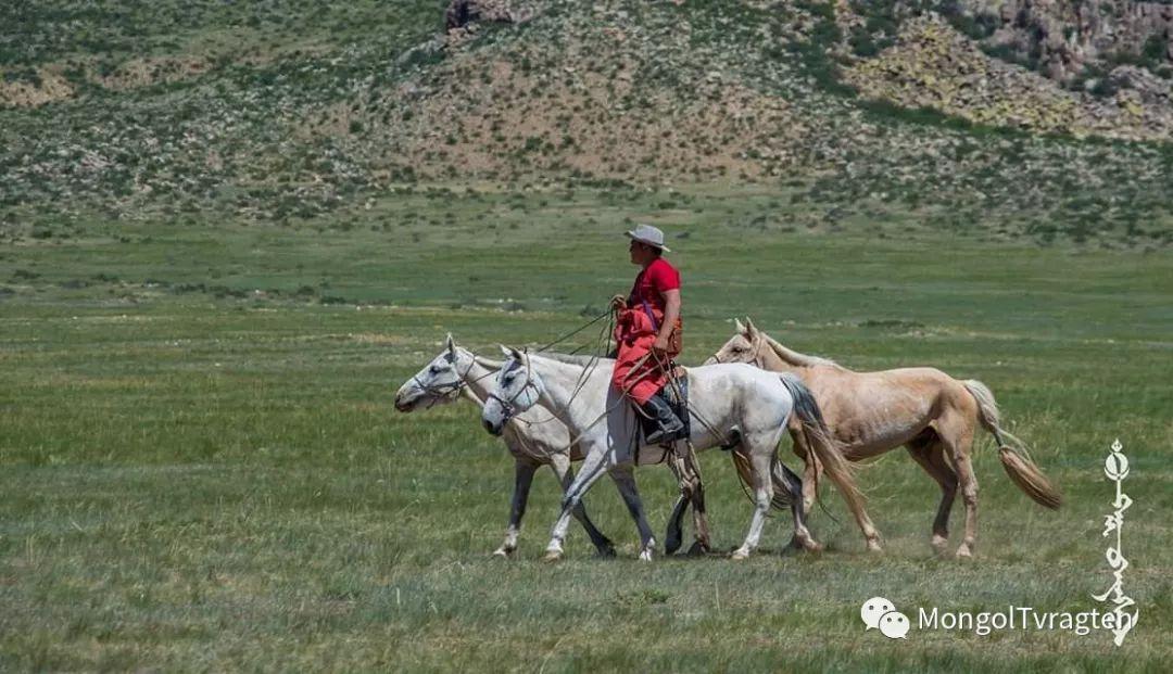 ᠮᠣᠩᠭᠣᠯ ᠮᠣᠷᠢ- ᠭ᠂ ᠪᠠᠶᠠᠰᠣᠯ 第24张 ᠮᠣᠩᠭᠣᠯ ᠮᠣᠷᠢ- ᠭ᠂ ᠪᠠᠶᠠᠰᠣᠯ 蒙古文化