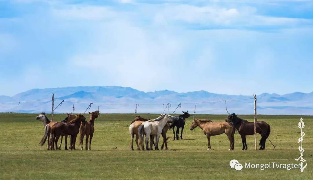 ᠮᠣᠩᠭᠣᠯ ᠮᠣᠷᠢ- ᠭ᠂ ᠪᠠᠶᠠᠰᠣᠯ 第28张 ᠮᠣᠩᠭᠣᠯ ᠮᠣᠷᠢ- ᠭ᠂ ᠪᠠᠶᠠᠰᠣᠯ 蒙古文化