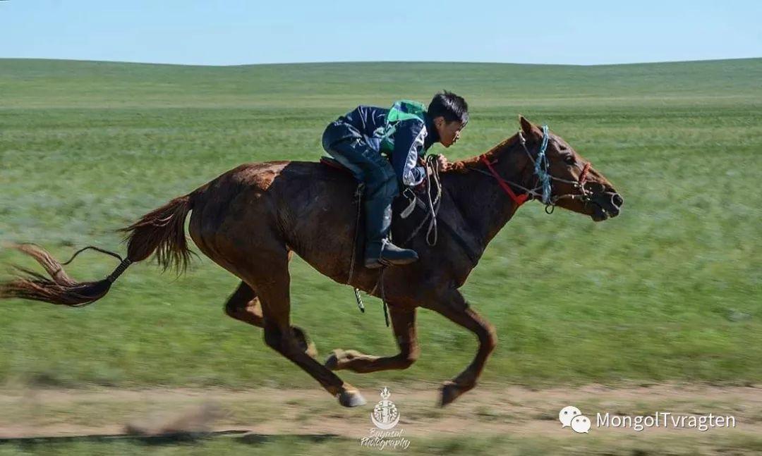 ᠮᠣᠩᠭᠣᠯ ᠮᠣᠷᠢ- ᠭ᠂ ᠪᠠᠶᠠᠰᠣᠯ 第30张 ᠮᠣᠩᠭᠣᠯ ᠮᠣᠷᠢ- ᠭ᠂ ᠪᠠᠶᠠᠰᠣᠯ 蒙古文化