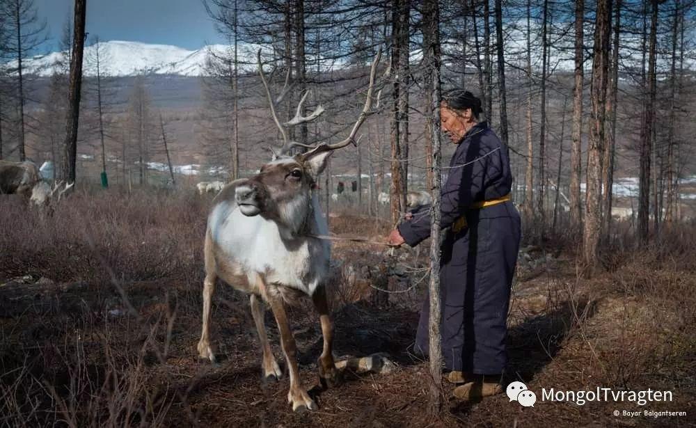 ᠴᠠᠲᠠᠨ ᠢᠷᠭᠡᠳ- ᠪᠠᠶᠠᠷ 第6张 ᠴᠠᠲᠠᠨ ᠢᠷᠭᠡᠳ- ᠪᠠᠶᠠᠷ 蒙古文化