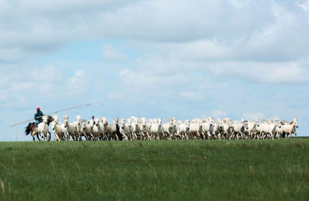 乌珠穆沁草原印记 第11张 乌珠穆沁草原印记 蒙古文化