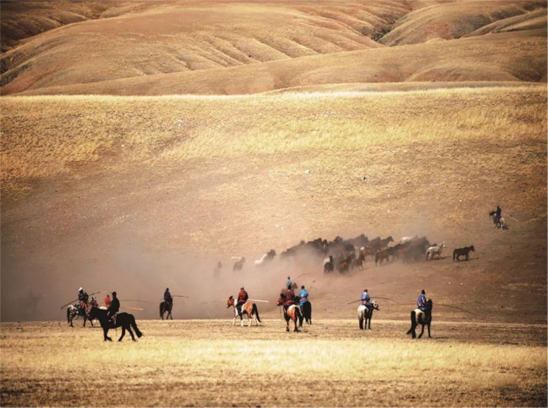 秋天的乌珠穆沁草原,太美了! 第6张 秋天的乌珠穆沁草原,太美了! 蒙古文化