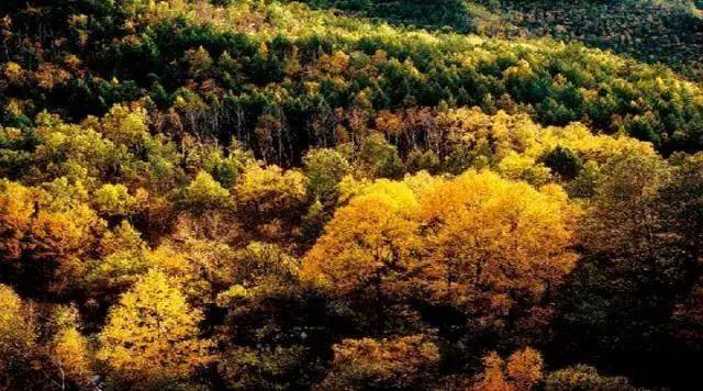 秋天的乌珠穆沁草原,太美了! 第12张 秋天的乌珠穆沁草原,太美了! 蒙古文化