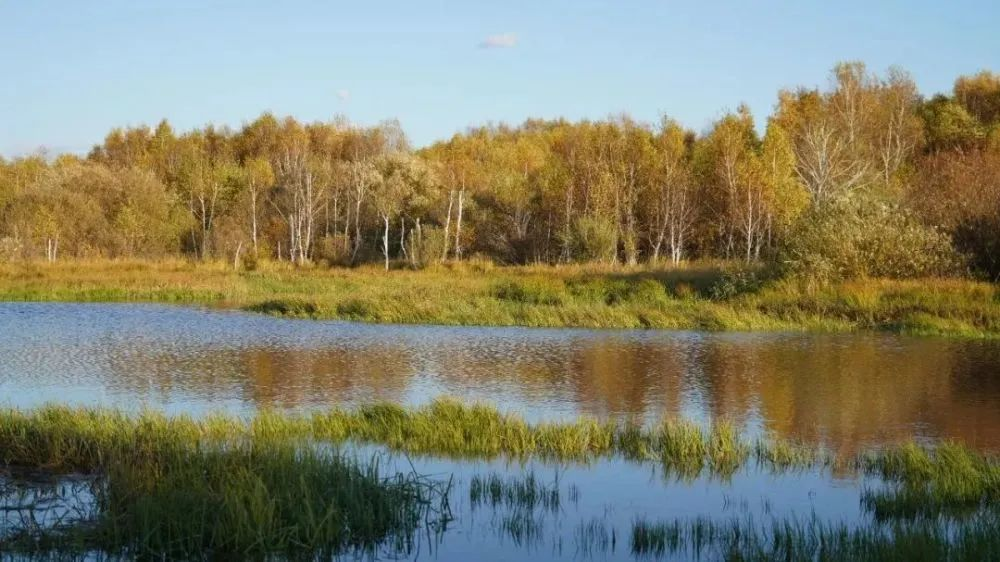 秋天的乌珠穆沁草原,太美了! 第16张 秋天的乌珠穆沁草原,太美了! 蒙古文化
