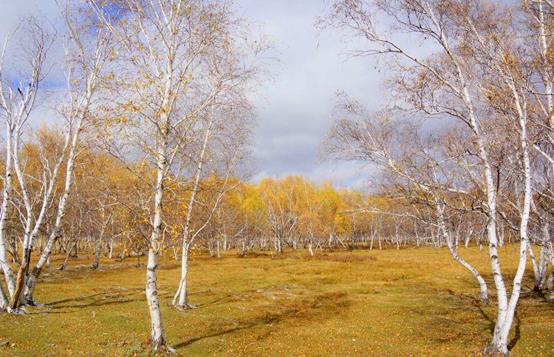 秋天的乌珠穆沁草原,太美了! 第23张 秋天的乌珠穆沁草原,太美了! 蒙古文化