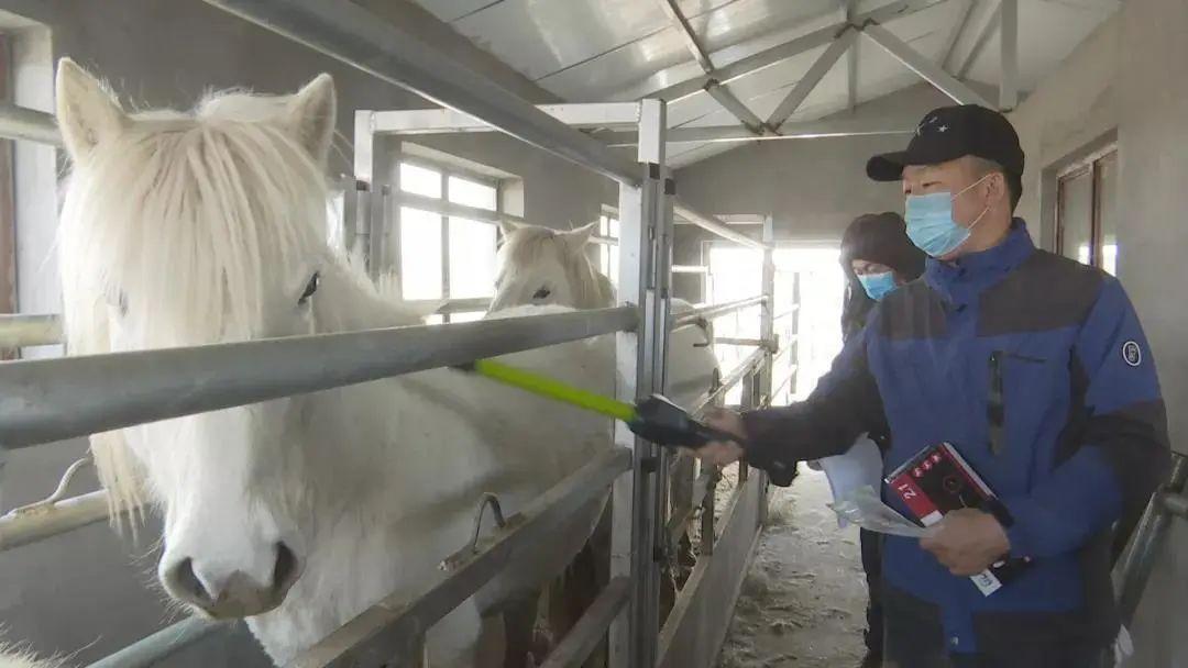 草原白马——乌珠穆沁的骄傲 第2张