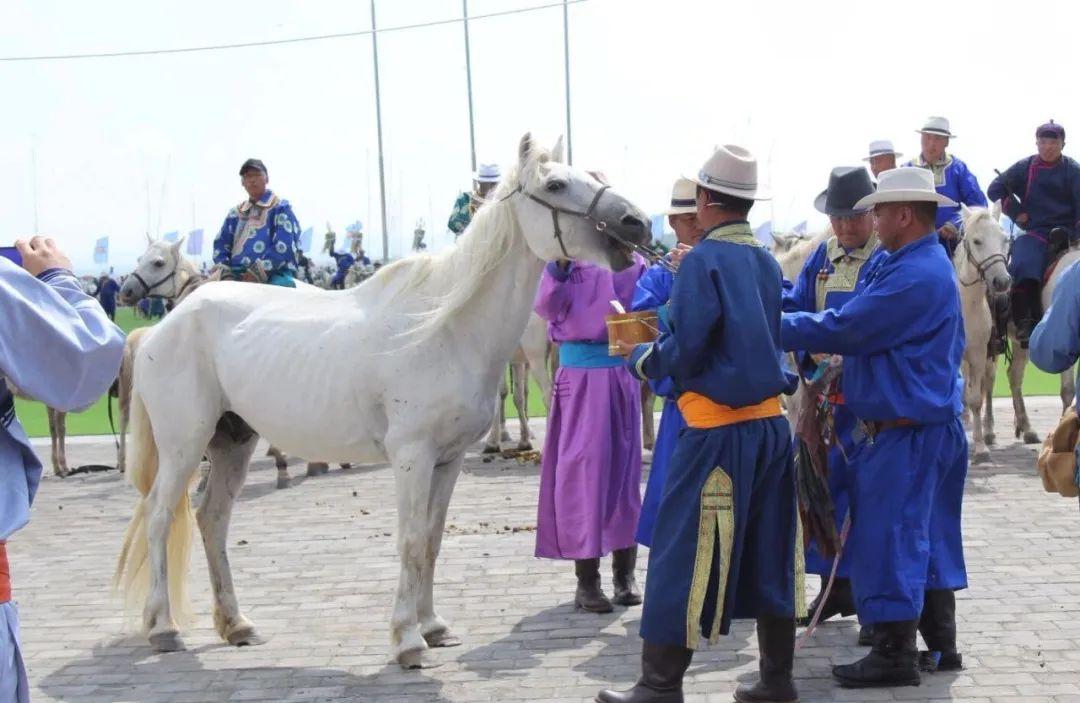 草原白马——乌珠穆沁的骄傲 第4张