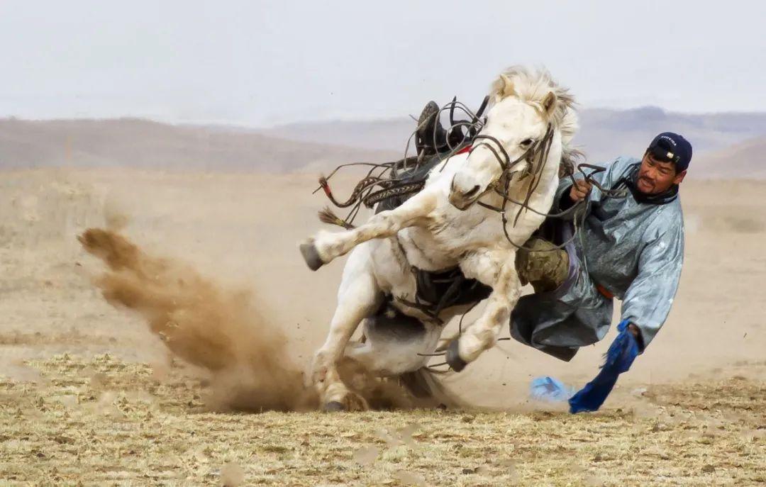 草原白马——乌珠穆沁的骄傲 第6张