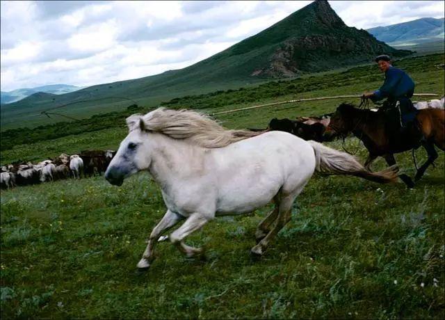 30年前的乌珠穆沁草原老照片