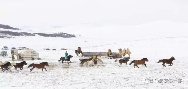 冬天的乌珠穆沁草原、美醉了 第4张 冬天的乌珠穆沁草原、美醉了 蒙古文化