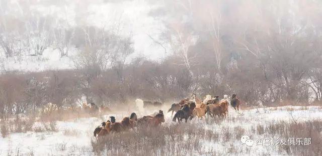 冬天的乌珠穆沁草原、美醉了 第6张 冬天的乌珠穆沁草原、美醉了 蒙古文化