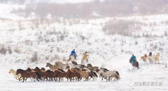 冬天的乌珠穆沁草原、美醉了 第5张 冬天的乌珠穆沁草原、美醉了 蒙古文化