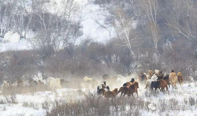 冬天的乌珠穆沁草原、美醉了 第7张 冬天的乌珠穆沁草原、美醉了 蒙古文化