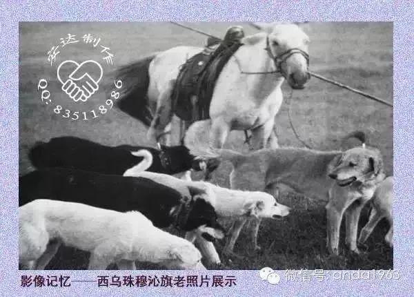 乌珠穆沁由来及老照片 第10张