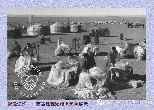 乌珠穆沁由来及老照片 第33张