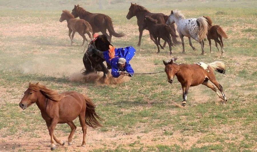 【蒙古历史】带你了解蒙古源流系谱 第13张 【蒙古历史】带你了解蒙古源流系谱 蒙古文化