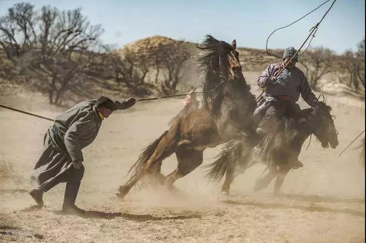 """阿巴嘎""""阿都沁""""马文化那达慕:马背上的文化传承(组图) 第2张"""