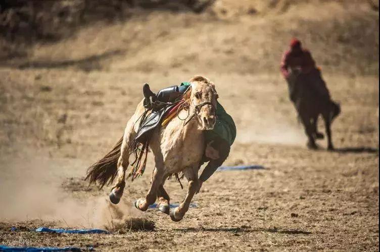 """阿巴嘎""""阿都沁""""马文化那达慕:马背上的文化传承(组图) 第7张"""