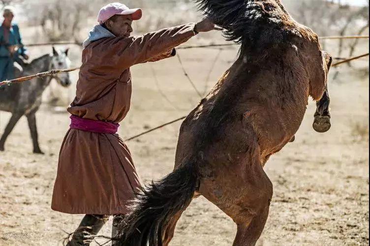 """阿巴嘎""""阿都沁""""马文化那达慕:马背上的文化传承(组图) 第11张"""
