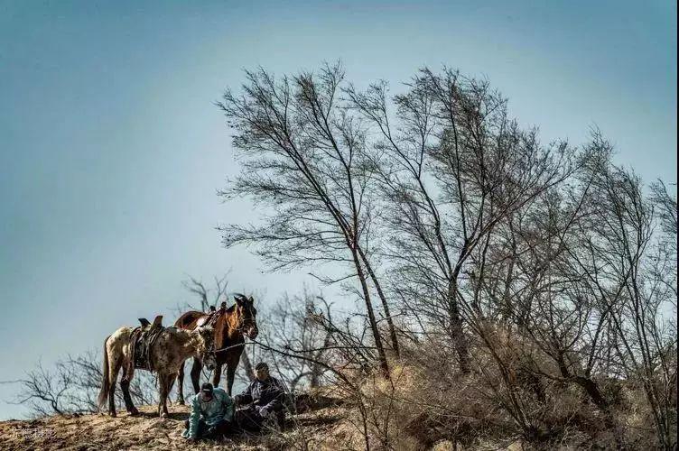 """阿巴嘎""""阿都沁""""马文化那达慕:马背上的文化传承(组图) 第14张"""