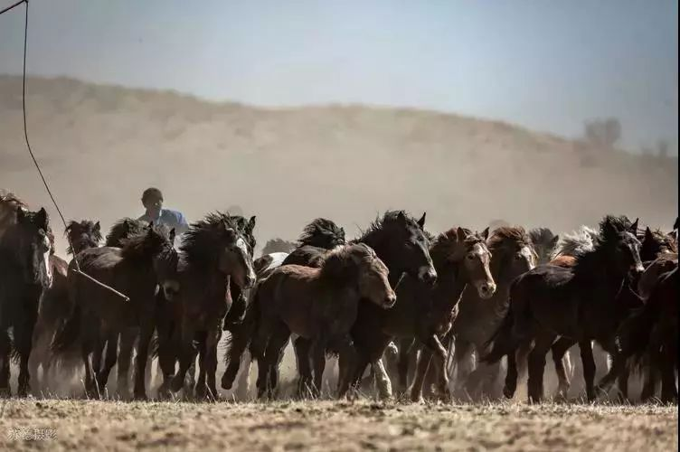 """阿巴嘎""""阿都沁""""马文化那达慕:马背上的文化传承(组图) 第18张"""