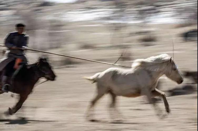 """阿巴嘎""""阿都沁""""马文化那达慕:马背上的文化传承(组图) 第21张"""