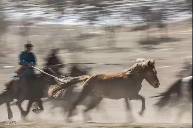 """阿巴嘎""""阿都沁""""马文化那达慕:马背上的文化传承(组图) 第22张"""