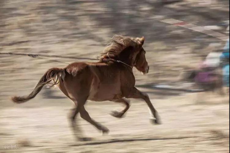 """阿巴嘎""""阿都沁""""马文化那达慕:马背上的文化传承(组图) 第23张"""