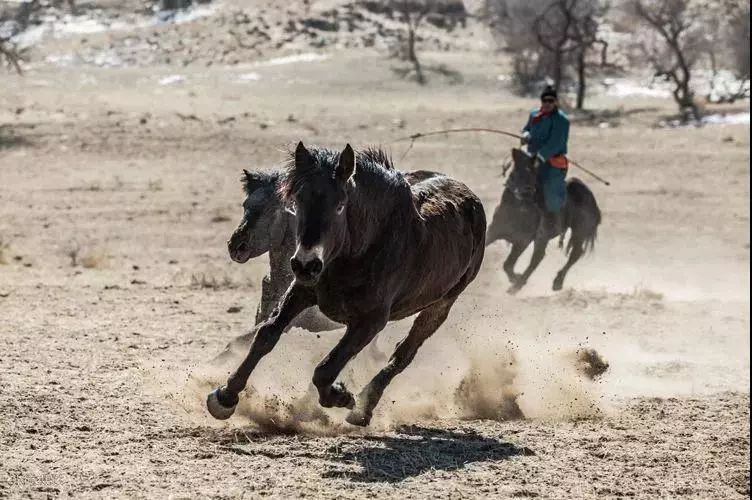 """阿巴嘎""""阿都沁""""马文化那达慕:马背上的文化传承(组图) 第26张"""