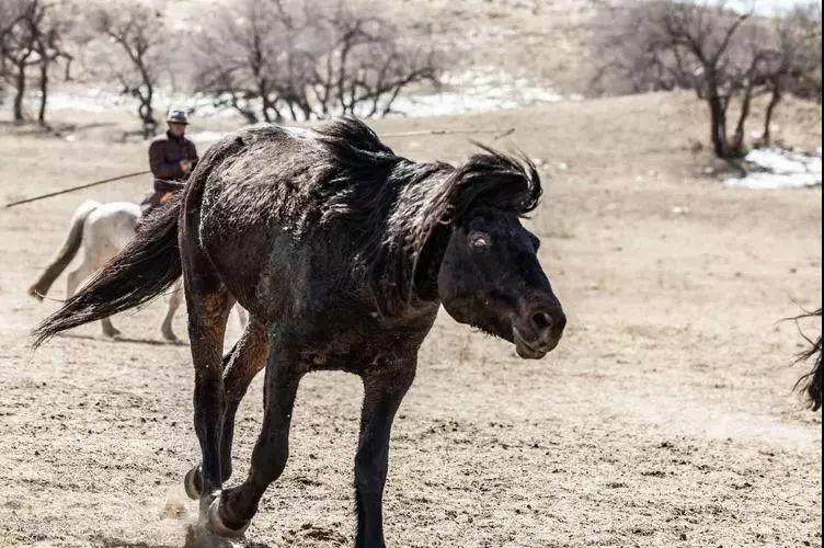 """阿巴嘎""""阿都沁""""马文化那达慕:马背上的文化传承(组图) 第25张"""