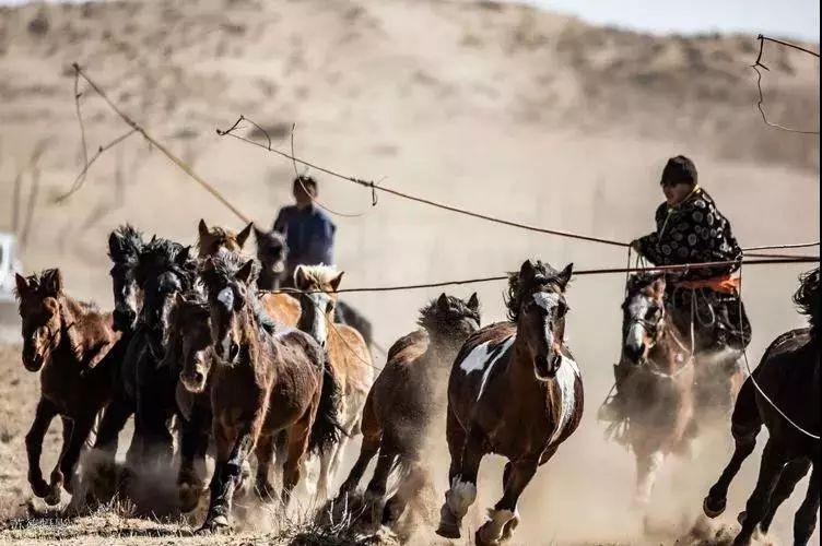 """阿巴嘎""""阿都沁""""马文化那达慕:马背上的文化传承(组图) 第27张"""