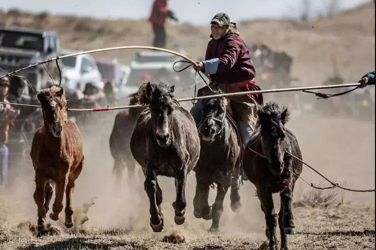 """阿巴嘎""""阿都沁""""马文化那达慕:马背上的文化传承(组图) 第29张"""